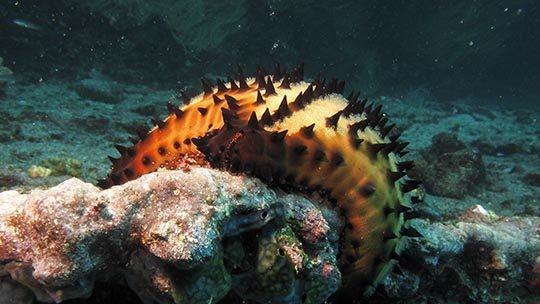 Galapagos-buceo-diving-estrella-isla