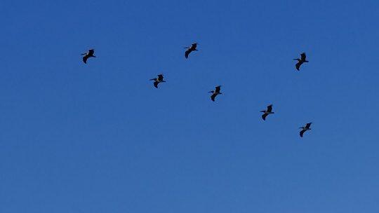 Nuquí-choco-buceo-pacifico-pelicanos-6